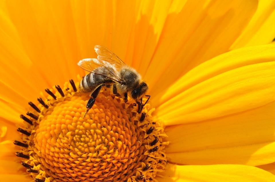 importance des abeilles pour l'agriculture - les ruchers du tigou